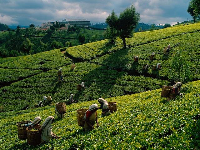 Путешествие в Шри-Ланка