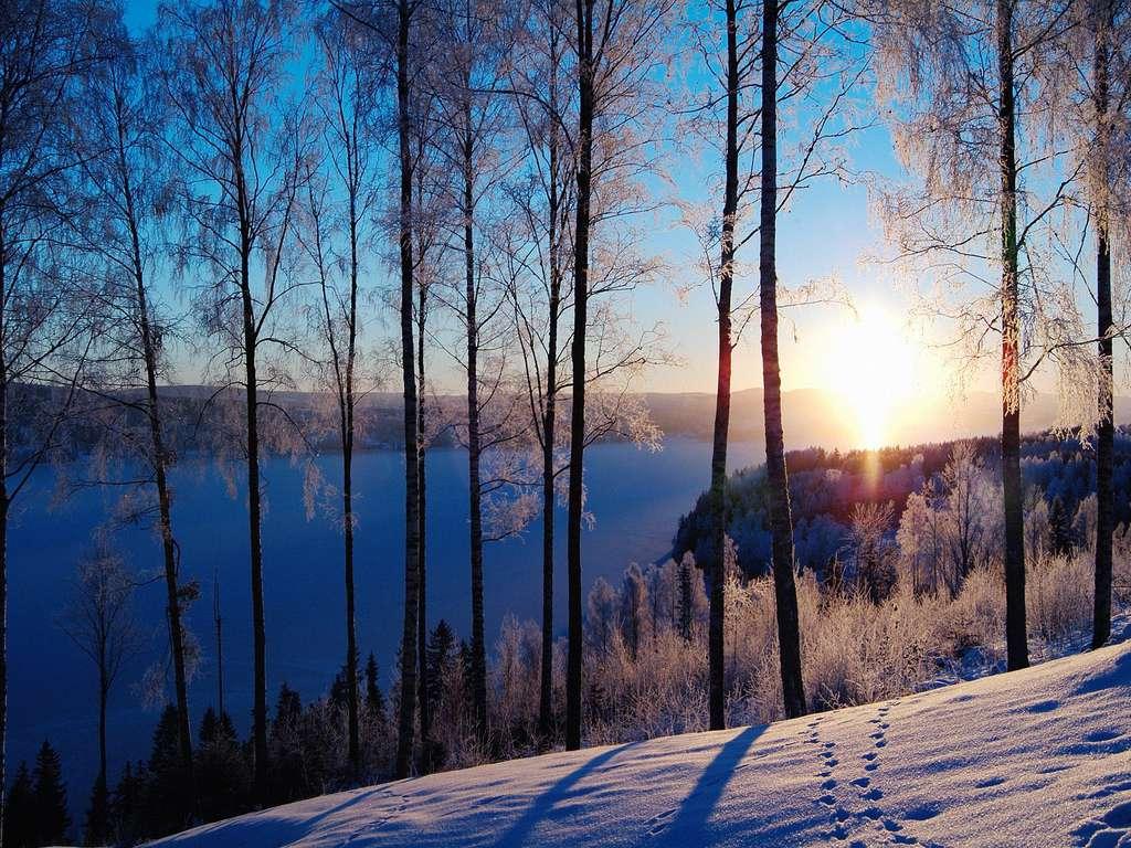 Зимний лес - замечательное место для празднования великого праздника - Нового года