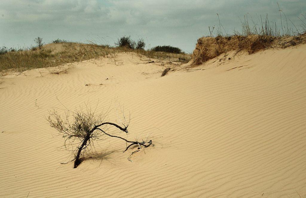 Олешковские пески – Украинская Сахара.