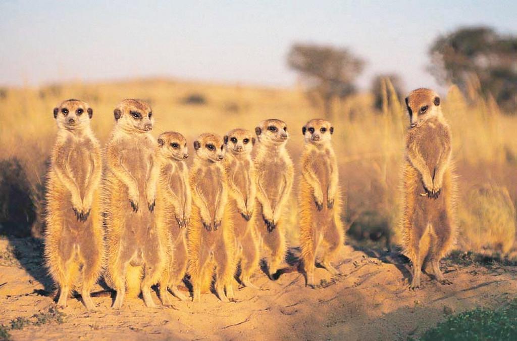 Пленяющая природа Африканской Ботсваны.