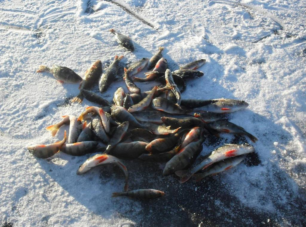 Рыбалка в Завидово