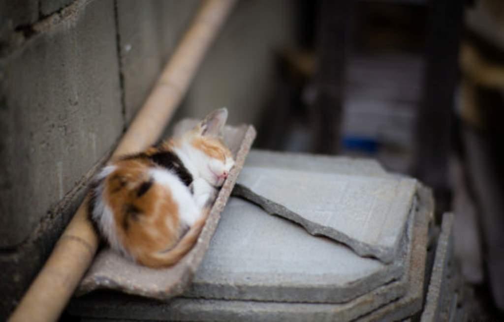 Остров кошек Тасиро