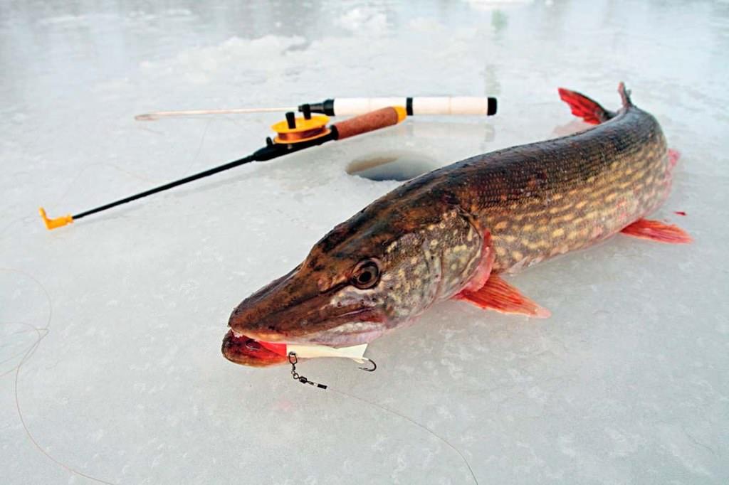 Как выбрать удочку для зимней рыбалки