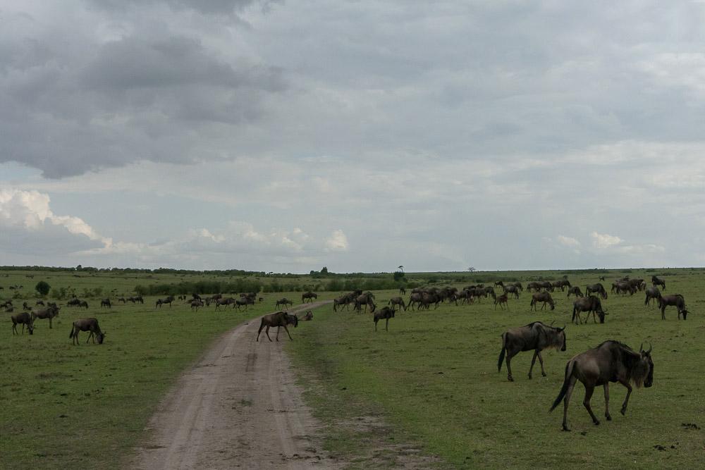 Кенийский заповедник Масаи-Мара